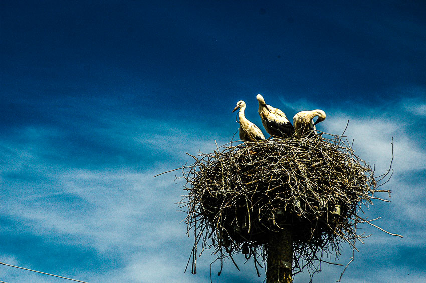 stork nest in Estonia